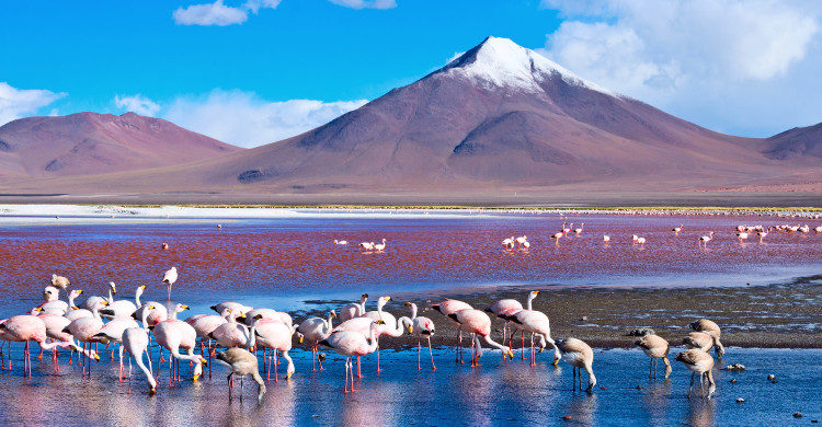 Cordillera Apolobamba en Bolivie - Istock