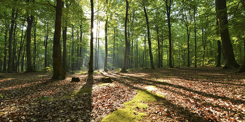 Déforestation (iStock)